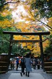 handelsresande i höstsäsong på Japan Royaltyfri Foto
