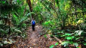 Handelsresanden går på en vandringsled i en djungel Royaltyfri Foto
