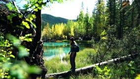 Handelsresanden med ryggsäcken och hatten promenerar ett stupat träd vid den blåa bergsjön i skogen arkivfilmer