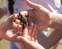 Handen av barn som rymmer gulligt nyfött, behandla som ett barn sköldpaddan Royaltyfri Bild