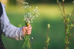 Handen av barnet som rymmer lösa blommor Fotografering för Bildbyråer