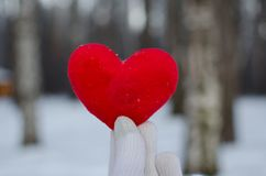 Handen av en man eller en kvinna i en vit handske rymmer en röd hjärta i vinterskogen mot den vita snön royaltyfri bild