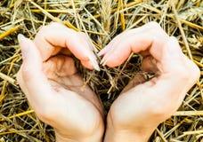 Handen in de vorm van een hart op de achtergrond van stro worden gevouwen dat stock foto's