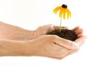 Handen die bloem houden Royalty-vrije Stock Foto's