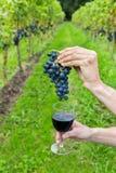 Handen die bos van druiven en wijnglas houden Stock Afbeelding