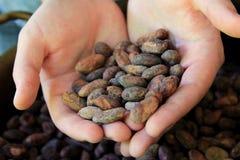 Handen die cacaobonen uithollen Stock Fotografie