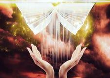 handen die de hemel onder ogen zien die giftbijbel krijgen Stock Afbeeldingen
