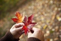 Handen die de herfstbladeren houden royalty-vrije stock afbeelding