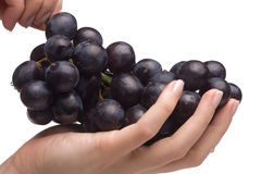 Handen die druiven houden Stock Afbeelding