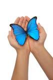 Handen die een blauwe vlinder houden Stock Foto