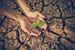 Handen die een boom op gebarsten aarde water geven royalty-vrije stock foto's