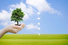 Handen die een jong boompje van de boominstallatie met het milieu houden die pictogram 4 planten stock afbeelding