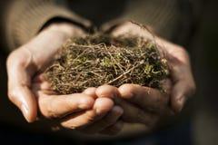 Handen die een nest houden stock foto