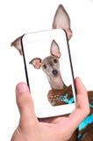 Handen die fotohond met smartphone nemen royalty-vrije stock foto