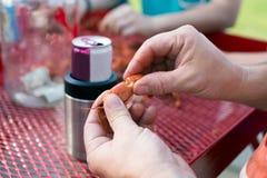 Handen die gekookte rivierkreeften houden die staart afbreken royalty-vrije stock foto's