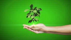Handen die het digitale groene installatie groeien voorstellen stock footage