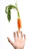 Handen die het hangen van wortel bereiken Royalty-vrije Stock Afbeeldingen