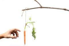Handen die het hangen van wortel bereiken - Reeks 2 Royalty-vrije Stock Fotografie