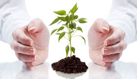 Handen die jong boompje beschermen royalty-vrije stock foto