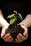Handen die jonge plant houden Royalty-vrije Stock Afbeelding