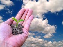 Handen die kleine boom houden Royalty-vrije Stock Afbeeldingen