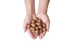 Handen die macadamia noten houden Royalty-vrije Stock Foto