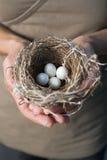 Handen die nest met eieren houden stock fotografie