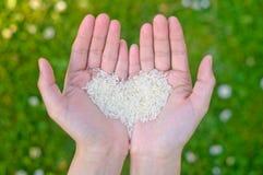 Handen die rijst houden Royalty-vrije Stock Afbeeldingen
