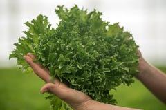 Handen die salade houden stock afbeelding