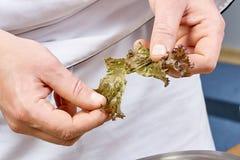Handen die slabladeren toevoegen in kom met salade, close-up Royalty-vrije Stock Fotografie