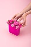 Handen die tedere bloeiende roze die rozen in document vakje schikken op roze wordt geïsoleerd Royalty-vrije Stock Afbeeldingen