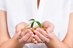 Handen die weinig installatie het groeien van muntstukken houden als symbool van geld Stock Afbeelding