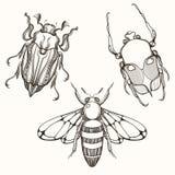 Handen dragen gravyr skissar av skarabé, May att bugga och biet D vektor illustrationer
