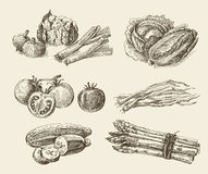 Handen dragen mat skissar Arkivfoto