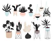 Handen drog huset planterar samlingen med olika tropiska växter Arkivfoto