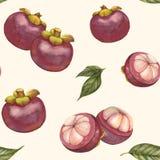Handen drog modellen för tropisk frukt för vattenfärgen sömlösa, mangosteen bär frukt, exotiska frukter, superfood Royaltyfri Foto
