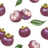 Handen drog modellen för tropisk frukt för vattenfärgen sömlösa, mangosteen bär frukt, exotiska frukter, superfood Royaltyfria Bilder