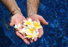 Handen en bloem Stock Foto's