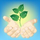 Handen en groene installatie Stock Foto's