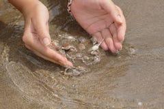 Handen en krabben Royalty-vrije Stock Foto