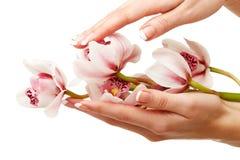 Handen en orchidee stock fotografie