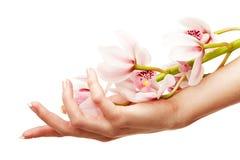 Handen en orchidee stock afbeeldingen
