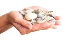 Handen en overzeese shells Stock Foto's
