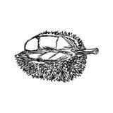 Handen för illustrationvektorklottret som dras av, skissar durianen vektor illustrationer