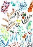 Handen f?r vattenf?rgheliconiasamlingen m?lade exotiska sidor och blommor som isolerades p? vit bakgrund royaltyfri illustrationer