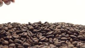 handen 4k tar de grillade kaffebönorna Ingrediens för kaffe stock video