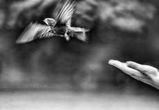 Handen lyftte barn Swifts royaltyfri fotografi