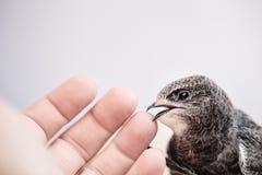Handen lyftte barn Swifts arkivbilder