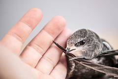Handen lyftte barn Swifts arkivfoton
