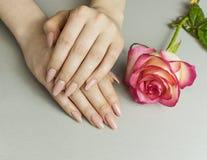 Handen med konstgjort manicured franskt spikar och den rosa rosa blomman royaltyfria foton